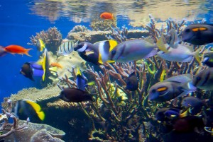 tank of tropical reef fishes