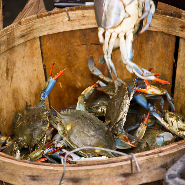 Crabs in a bucket by Todd Shaffer. Used under a Creative Commons license from Flickr.